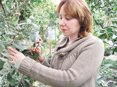 Ольга Усольцева показала, насколько экзотичными могут быть цветки фейхоа.