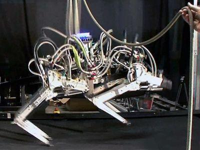 В США создали скоростного робота-гепарда (ВИДЕО)