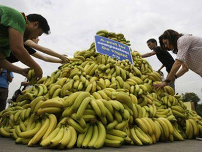 В результате климатических метаморфоз на смену картофелю и злакам придут бананы и маниока