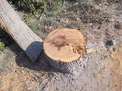 Дончанин вырубил ценные деревья, чтобы сделать себе парковку