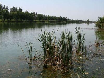 В Селидово назревает экологическая катастрофа