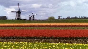 В Донецке требуются спецы по Голландии