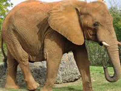 В Таиланде  слон убил погонщика и скрылся с группой туристов на спине