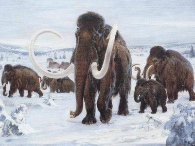 Ученые выяснили, почему вымерли последние мамонты
