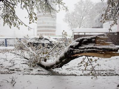 Снегопад и шквальный ветер: в столице Молдовы объявили чрезвычайное положение (ФОТО, ВИДЕО)