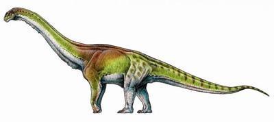 Ученые классифицировали самого большого динозавра в истории