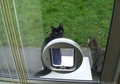 Microsoft создала «умную» дверь для домашних животных (ВИДЕО)