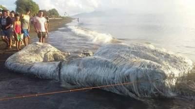 На Филиппинах нашли странное существо, выброшенное на берег