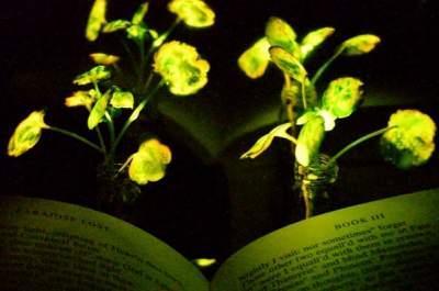 Светящиеся растения из Аватара появятся на Земле