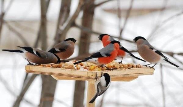 Хлеб опасен для птиц