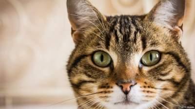 Ученые выяснили, почему у кошек появляются полоски