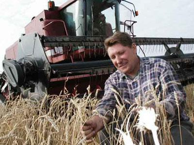 Собранный хороший урожай ранних зерновых дает надежду украинской экономике.