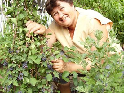 «Вот она - моя красавица! - демонстрирует деревце ирги Людмила Васильева. - Совсем молодая, но уже урожайная!»