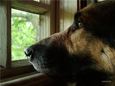 Фонд защиты животных Краматорску не нужен?